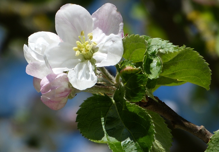 Ein schöner Tag im Mai – A nice day inmay