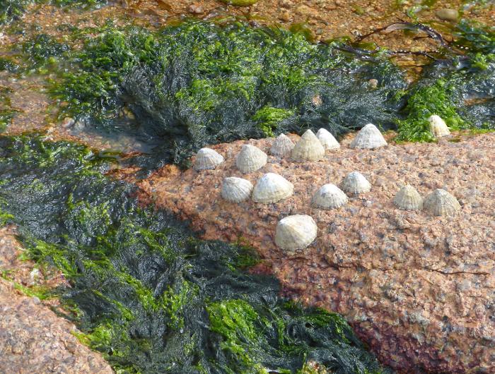 Rosa Granitküste12