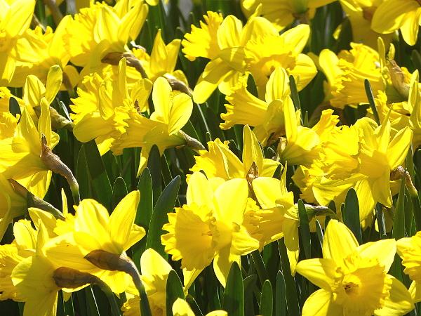 Frühlingsboten – Heralds ofSpring