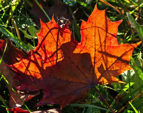 Herbstimpressionen – AutumnalImpressions
