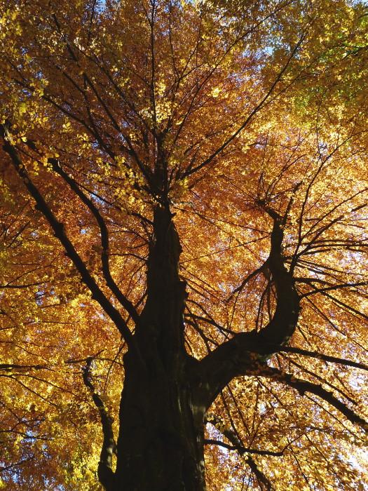 autumn52