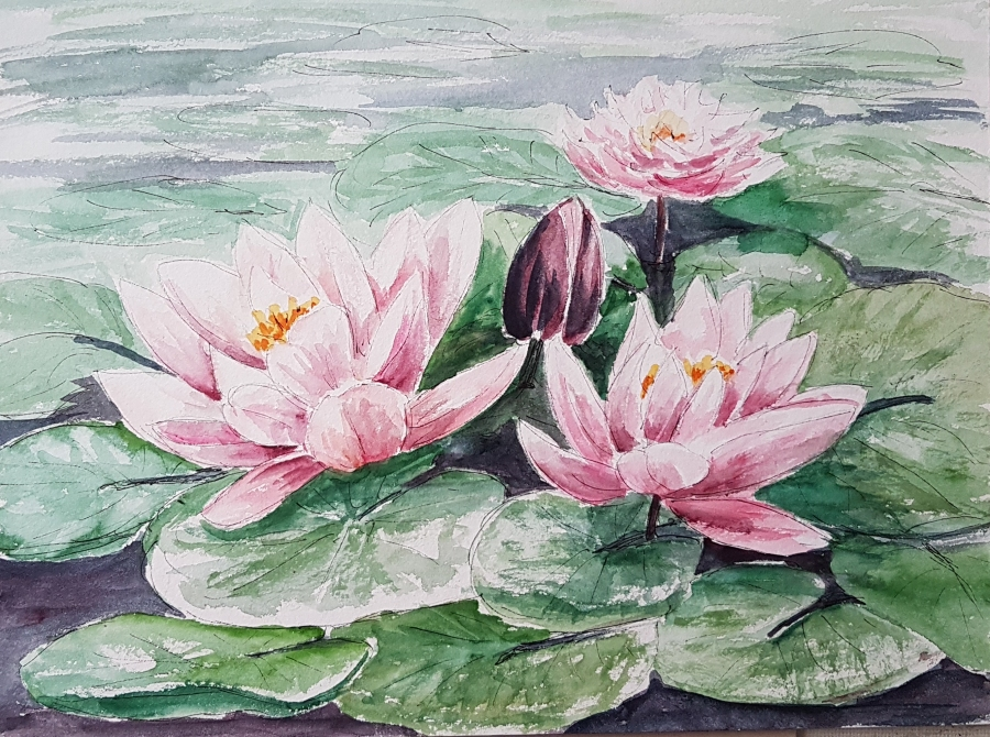 Seerosen – Waterlilies
