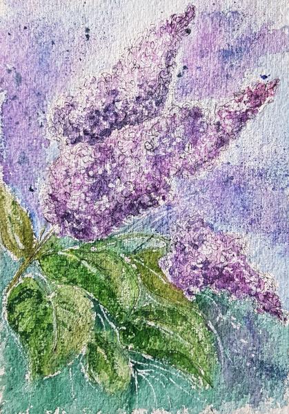 Flieder – Lilac