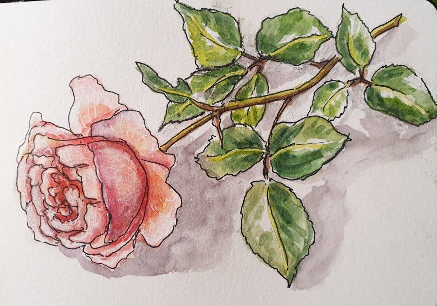 Nur eine Rose… – Just aRose…