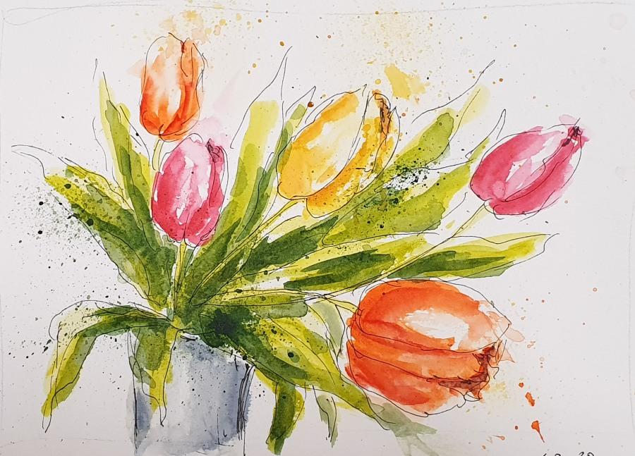 Tulpen – Tulips