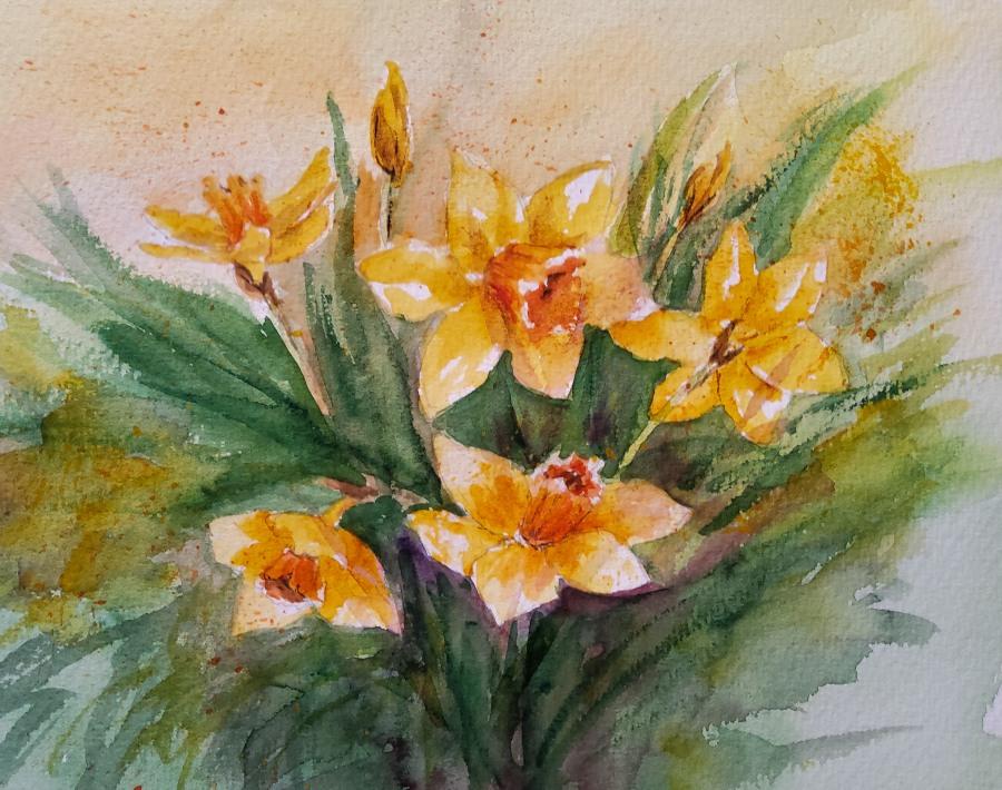 Nochmal Osterglocken- Daffodils,Again