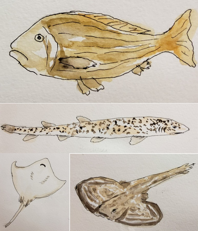 Zeichnen im Aquarium – Sketching in the Aquarium