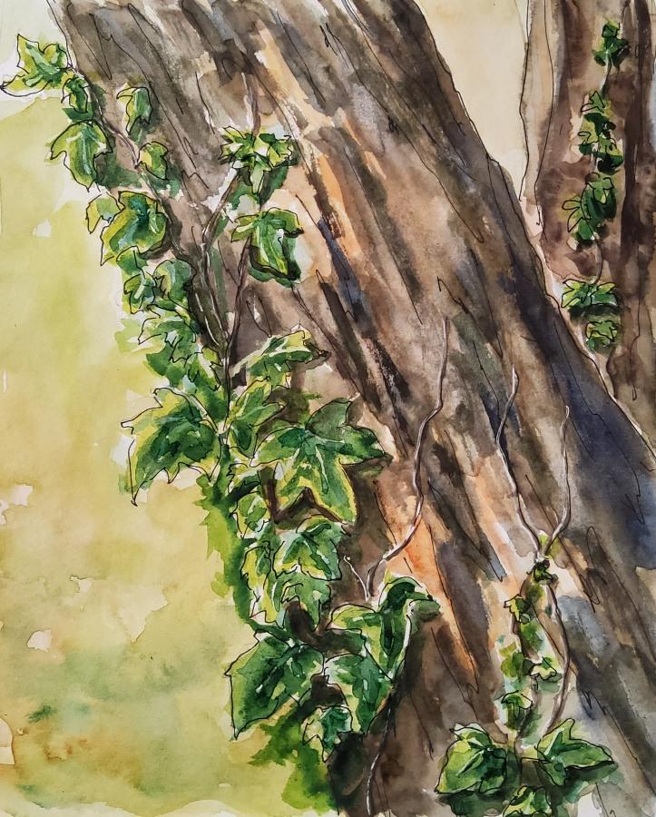 Baum mit Efeu – Treetrunk withIvy