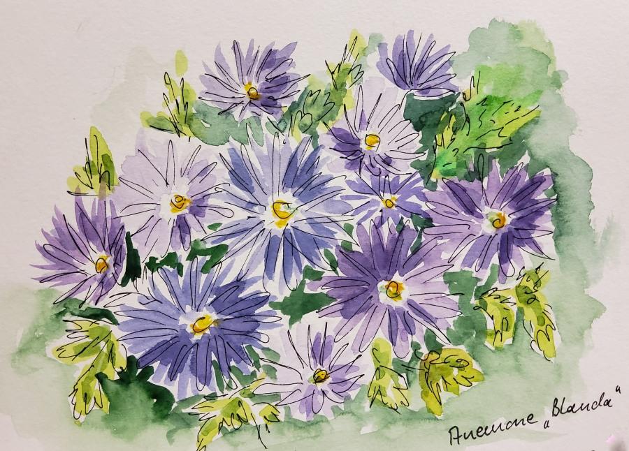 Kleine Zeichnungen im Botanischen Garten – Small Sketches in the BotanicGarden