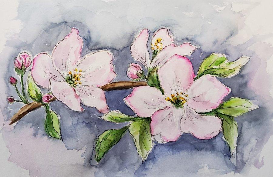 Apfelblüten – AppleFlowers