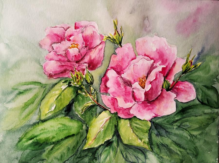 Rosen – Roses