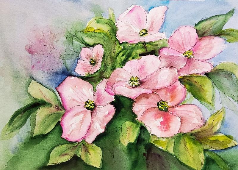 Blüten-Hartriegel – FloweringDogwood