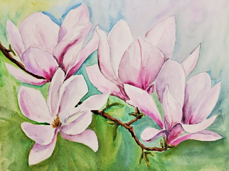 Magnolien – Magnolias